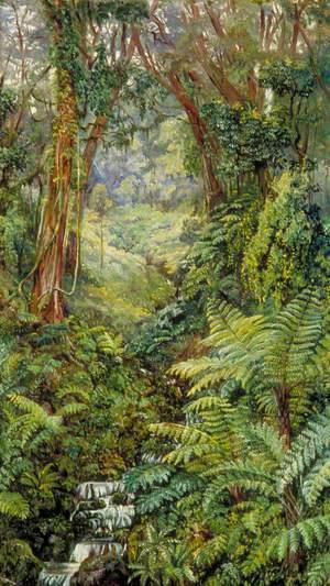 Valley of Ferns near Rungaroon, India