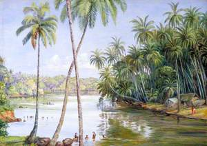 Cocoanut Palms on the River Bank near Galle, Ceylon