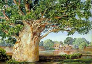 African Baobab Tree in the Princess's Garden at Tanjore, India