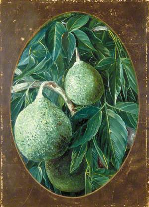 The Bael Fruit