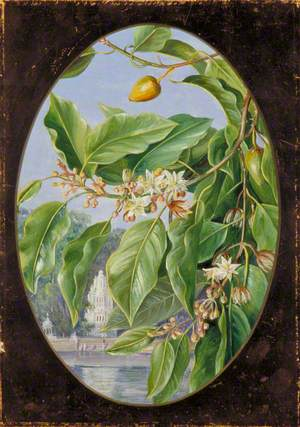 Foliage, Flowers and Fruit of a Tree Sacred to Krishna