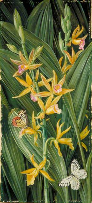 An Orchid and Butterflies