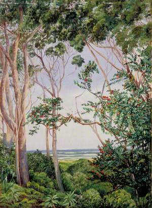 Trees from the Artist's Hut at St John's, South Africa