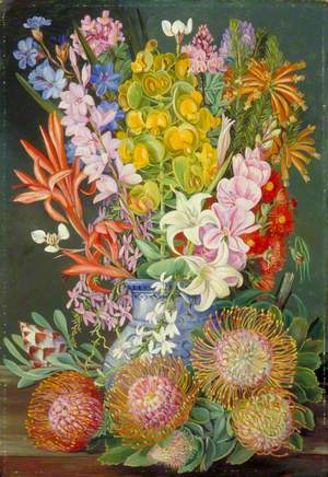 Wild Flowers of Ceres, South Africa
