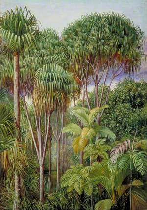 Screw-Pines, Palms, Tree-Ferns and Cinnamon Trees on the Hills of Mahé