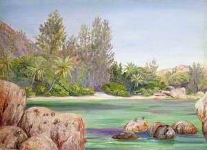 Life on the Coast of Praslin, Seychelles