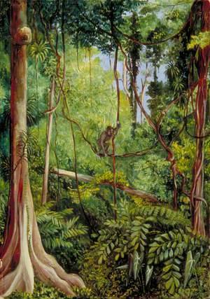 Forest Scene, Matang, Sarawak, Borneo