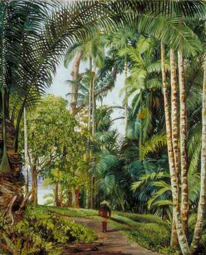 Walk under Palms with a Glimpse of the River at Sarawak, Borneo