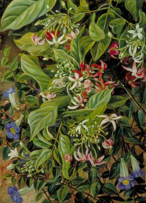 Two Climbing Shrubs, Painted at Singapore
