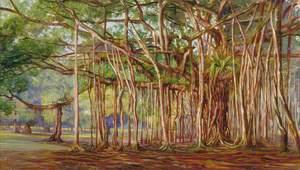Banyan Trees at Buitenzorg, Java