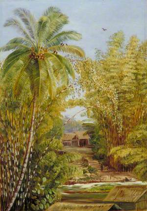 Bamboos and Cocoanut Palm