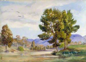 She Oak Trees on the Bendamere River, Queensland, and Companion Birds