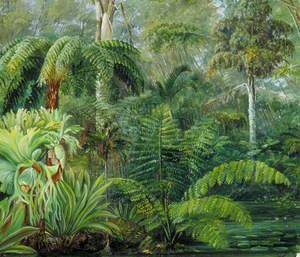 Palms and Ferns, a Scene in the Botanic Garden, Queensland