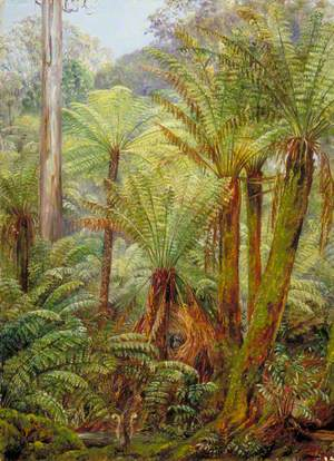 Tree Ferns in Victoria with a Nest of the Lyre Bird