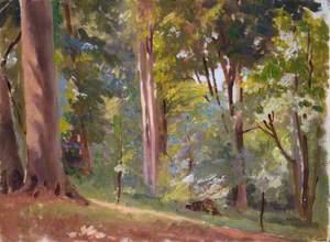 Stillness in the Forest