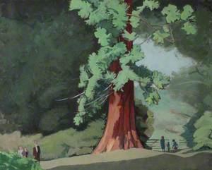 Giant Sequoia, Langley Park