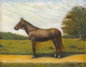 'Albuhera', a Horse