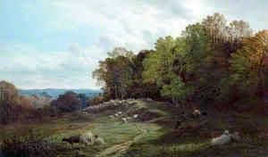 Pasture near Swansea