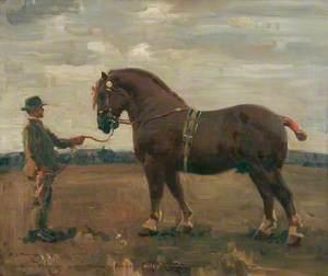 'Mendham Ensign', Suffolk Stallion