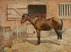 Study of a Pony