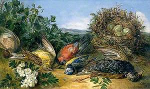 Dying Birds, Illustration for a Poem