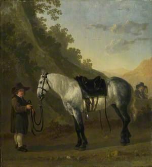 A Boy holding a Grey Horse