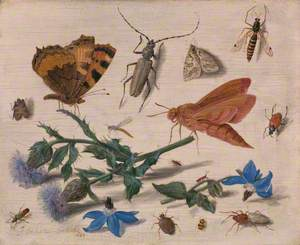 Butterflies, Moths and Insects with Sprays of Creeping Thistle and Borage