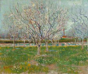 Orchard in Blossom: Plum Trees