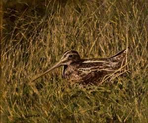 Seabird on a Nest