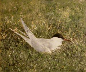 Snipe Nesting in Grassland