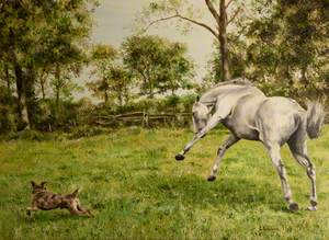 Grey Horse and a Dog in a Field