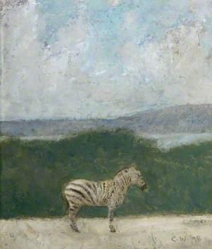 Zebra on Cavehill