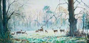 Deer at Castle Upton, Templepatrick