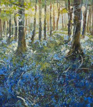 Bluebells, Tullymore Forest