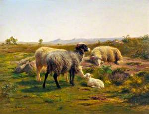 Sheep and a Lamb