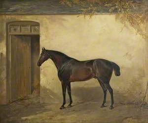 Bay Horse Outside a Stable Door