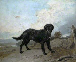 Black Retriever in a Landscape