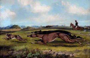 Two Greyhounds Coursing a Hare