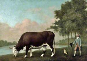 The Lincolnshire Ox