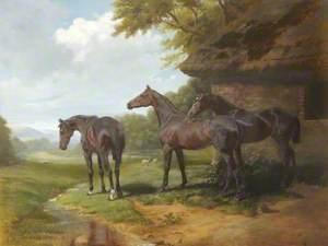 'Coronet', 'Merryman' and 'Dewdrop'