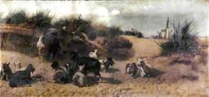Goats, Outskirts of Cádiz