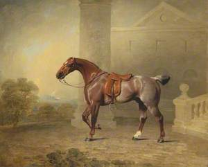 The Prince of Wales's Favourite Roan Hack
