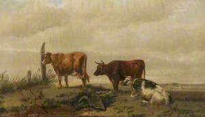 Three Cattle on Open Land