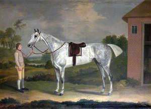 'Fury', a Dappled Grey with His Groom