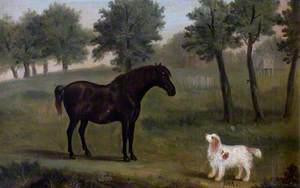 'Bob', a Black Horse, and 'Jock', a Spaniel