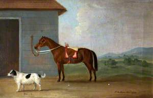 'Bounce', a Spaniel, with a Bay Horse