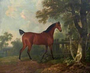 'Amaranth', the Property of A. B. St Leger, Esq.