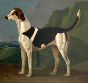 'Mischief' (a Favourite Hound) Belonging to Sir John William De la Pole, Bt