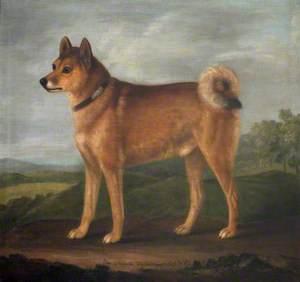 'Fox', a Favourite Dog of Sir John William De la Pole, Bt