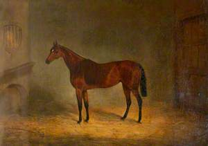 'Lady Liverpool', a Bay Horse in a Stable